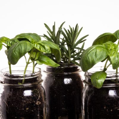How to Make a Mason Jar Indoor Herb Garden – 7 Simple Steps